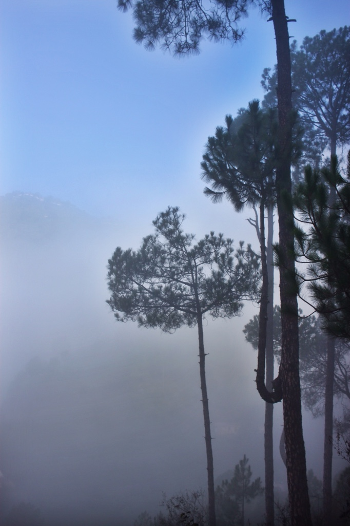 Misty morning trees on the ride from Kalka to Shimla by toy train.